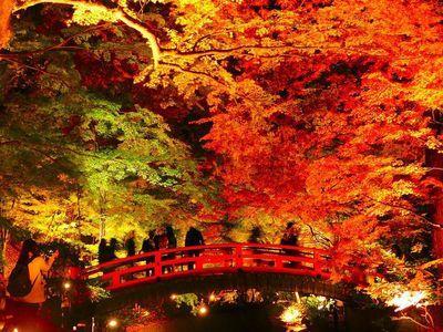 北野天滿宮楓葉點燈