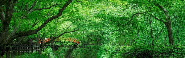 北野天滿宮青楓