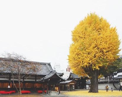 佛光寺銀杏