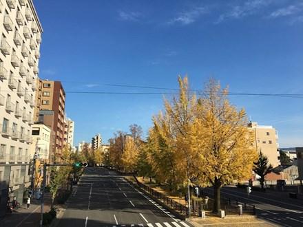崛川銀杏大道