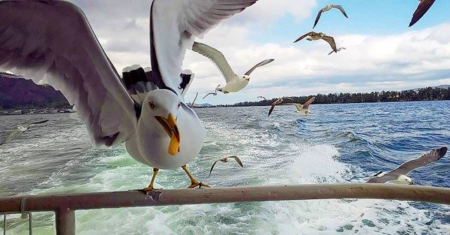 天橋立觀光遊覽船