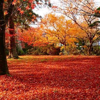 大原紅葉地毯