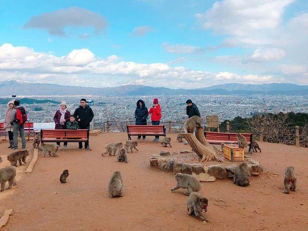 嵐山猴子公園