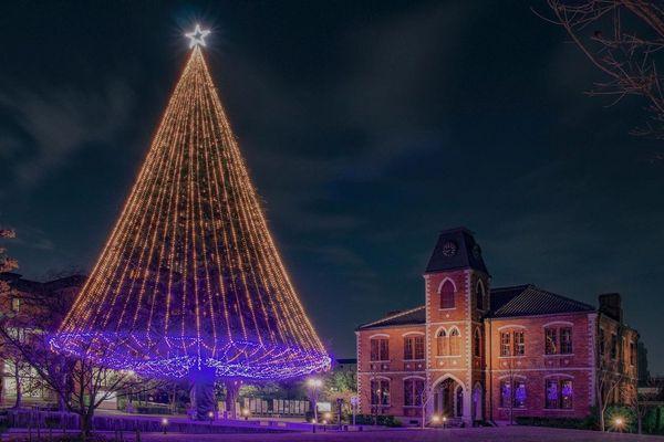 同志社大學聖誕樹