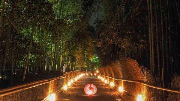 嵐山花燈路 竹林小徑