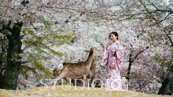 京都櫻京和服外拍