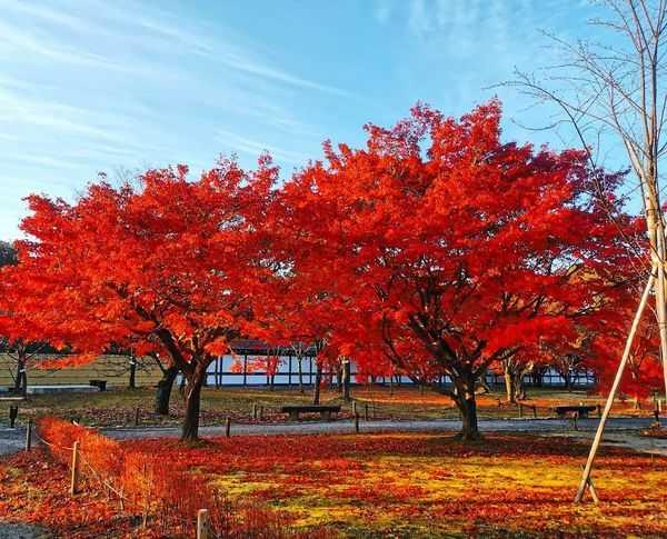 京都賞楓景點二條城