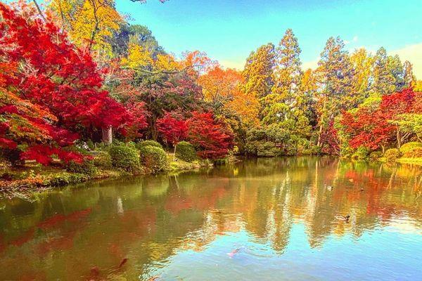 京都賞楓景點京都府立植物園