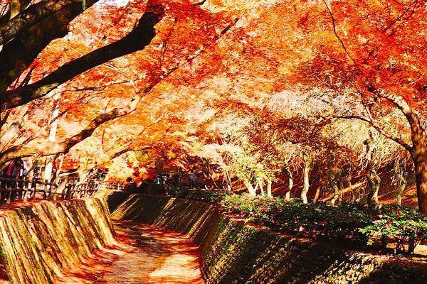 京都賞楓景點北野天滿宮