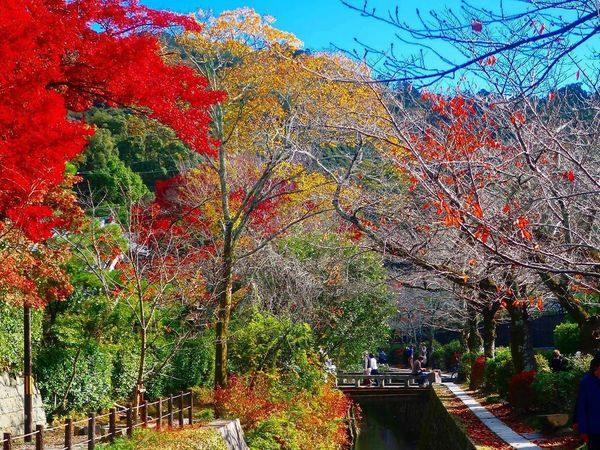 京都賞楓景點哲學之道