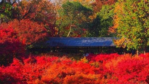 京都賞楓景點東福寺