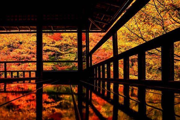 京都賞楓景點琉璃光院